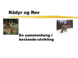 R dyr og Rev