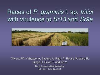 Races of  P. graminis  f. sp.  tritici  with virulence to  Sr13  and  Sr9e