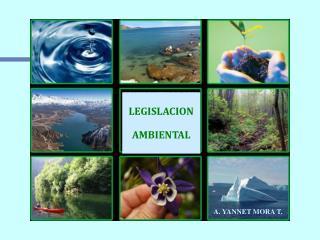 Legislación Ambiental A. Yannet Mora T.