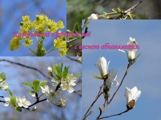 Каждый год в природе всё                                    с весною обновляется