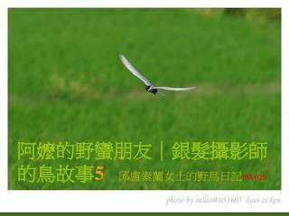阿嬤的野蠻朋友|銀髮攝影師的鳥故事 5 邱盧素蘭女士的野鳥日記 MAY05