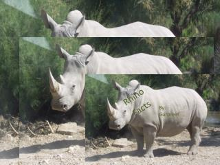 Rhino  Facts