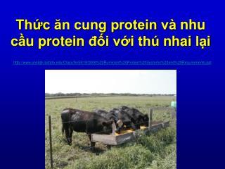 Thức ăn cung protein và nhu cầu protein đối với thú nhai lại