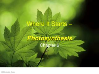 Where It Starts     Photosynthesis