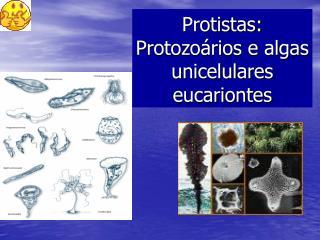 Protistas: Protozoários e algas unicelulares eucariontes