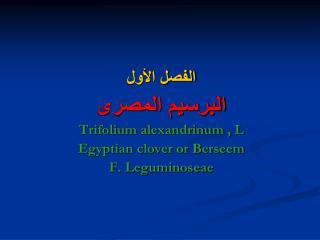 الفصل الأول البرسيم المصرى Trifolium alexandrinum , L Egyptian clover or Berseem F. Leguminoseae