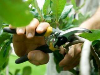 Podas Quando eu era criança, encontrei, um dia, um jardineiro, com uma tesoura enorme na mão.