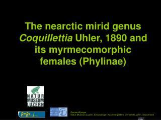 The nearctic mirid genus Coquillettia  Uhler, 1890 and its myrmecomorphic females (Phylinae)