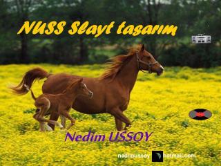 NUSS Slayt tasarım