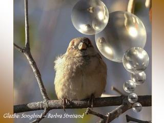 Glazba : Songbird – Barbra Streisand