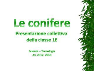 Le conifere Presentazione collettiva  della classe 1E Scienze – Tecnologia As. 2012- 2013