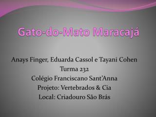 Gato-do-Mato  Maracajá