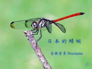 日 本 的 蜻 蜓    音樂背景 :Nocturne