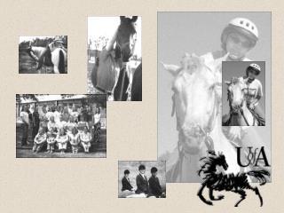 The D.E. King Equine Program
