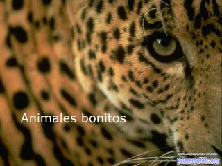 Animales bonitos
