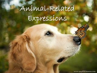Animal-Related Expressions
