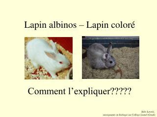 Lapin albinos – Lapin coloré