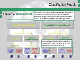 The initial  Dichotomous Phase  of LCCS