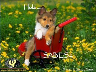 SABES….