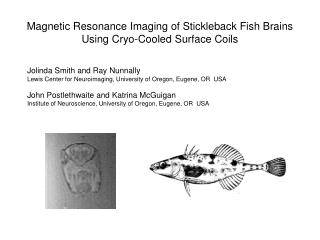 Magnetic Resonance Imaging of Stickleback Fish Brains Using Cryo-Cooled Surface Coils