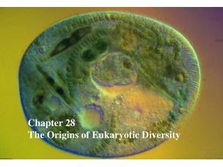 Chapter 28 The Origins of Eukaryotic Diversity