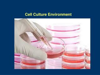 Cell Culture Environment