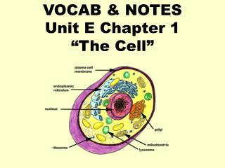 "VOCAB & NOTES Unit E Chapter 1 ""The Cell"""