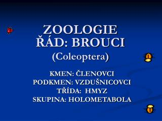 ZOOLOGIE ŘÁD: BROUCI (Coleoptera)