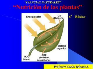 """"""" Nutrición de las plantas """" 6° Básico"""