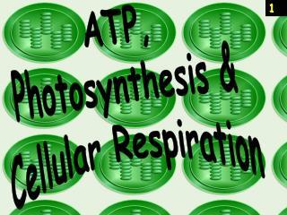 ATP, Photosynthesis & Cellular Respiration