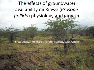 The effects of groundwater availability on  Kiawe  ( Prosopis pallida ) physiology and growth