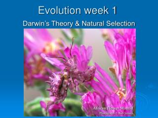 Evolution week 1