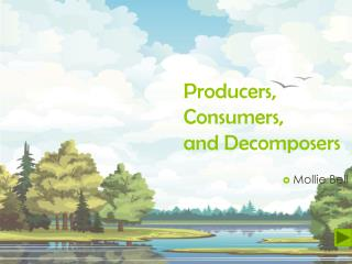 Producers , Consumers , and Decomposers