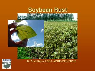 Soybean Rust