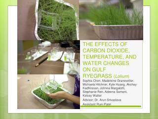 THE EFFECTS OF CARBON DIOXIDE, TEMPERATURE, AND WATER CHANGES ON GULF RYEGRASS  ( Lolium )