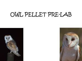 OWL PELLET PRE-LAB