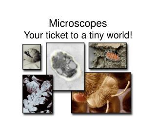 Microscopes  Your ticket to a tiny world!