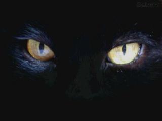 ¿ Usted sabia que los gatos tienen una misión en nuestra vida?