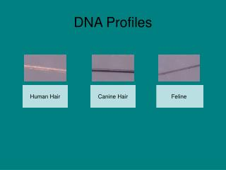 DNA Profiles
