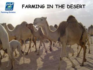Farming in the desert-x 3006