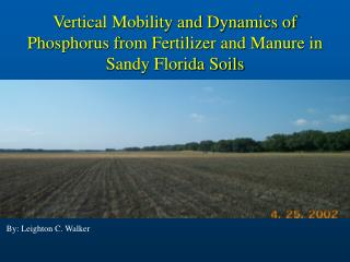 Vertical Mobility and Dynamics of Phosphorus from Fertilizer and Manure in Sandy Florida Soils