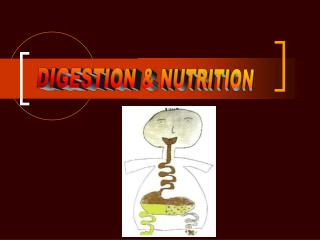 DIGESTION  NUTRITION