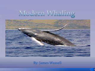 Modern Whaling