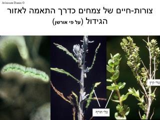צורות-חיים של צמחים כדרך התאמה לאזור הגידול  ( על פי אורשן )
