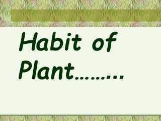 Habit of Plant……...