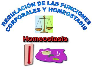 REGULACIÓN DE LAS FUNCIONES  CORPORALES Y HOMEOSTASIS