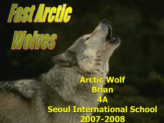 Arctic Wolf Brian  4A Seoul International School 2007-2008