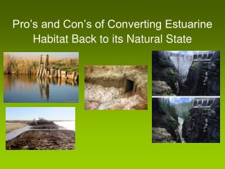 Pro's and Con's of Converting Estuarine Habitat Back to its Natural State