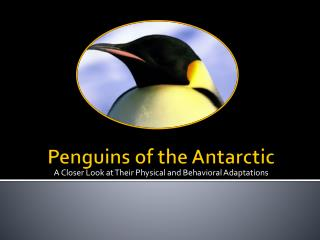 Penguins of the Antarctic