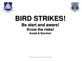 BIRD STRIKE AWARENESS